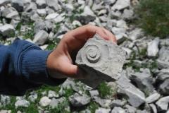 Catria fossili 4